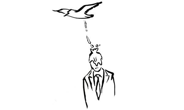 Phân chim rơi vào đầu
