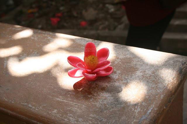 Hoa rơi cửa Phật