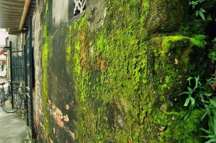 Rêu phong mọc xung quanh nhà